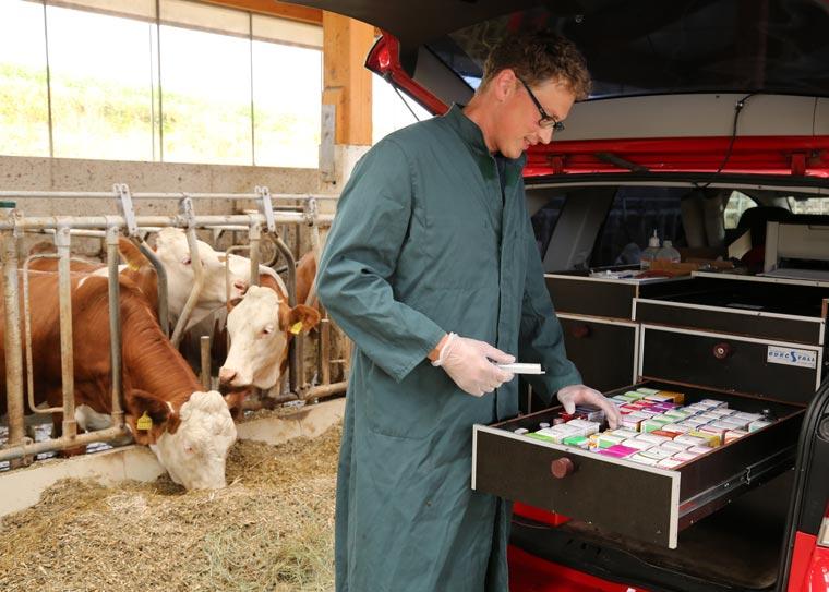 Versorgung von Rindern